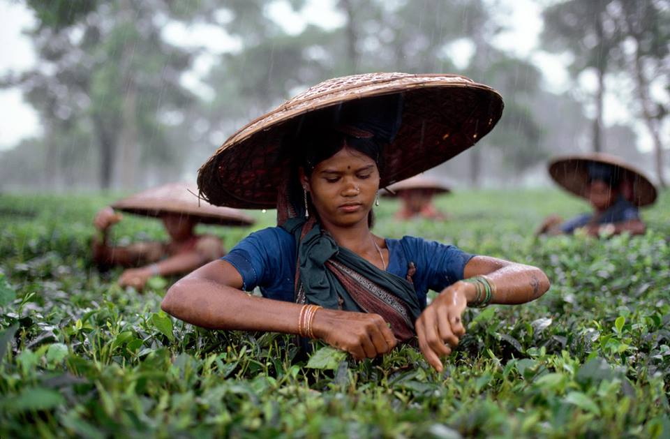 sylhet tea garden steve mccurry